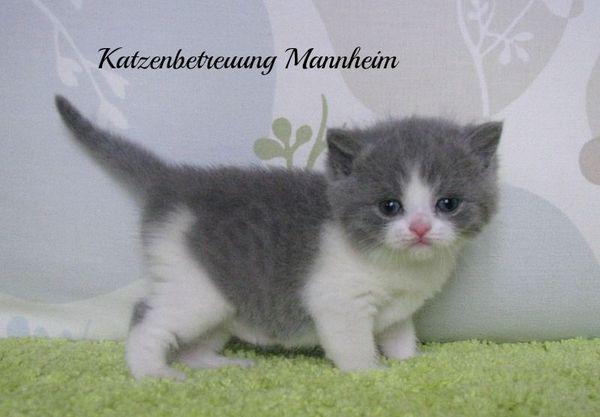 Mobile Katzenbetreuung in Mannheim