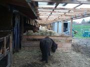 Offenstallplatz für Pony Pferd frei