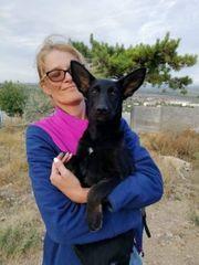 Hundekind Sina sucht ein Zuhause