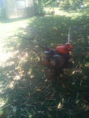 Einachser Hako Gartenfräse