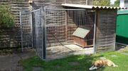 Hundezwinger mit Hütte