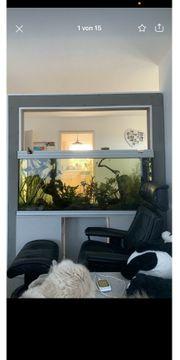 Raumteiler Aquarium