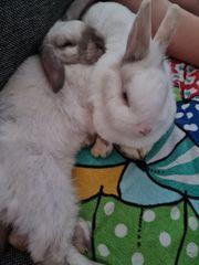 Ich verkaufe hier meine Kaninchenbande