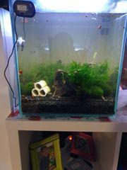 aquarium mit garnelen licht decco