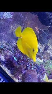 Meerwasser Korallen Fische