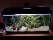 verschenke aquarium komplett