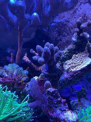 Meerwasser Hobbyaufgabe Korallen Fische Technik