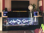 Meerwasser Lebendgestein Aquarium Auflösung