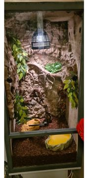verkaufe 2 boas und terrarium