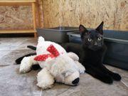 Katzenbub Alexis möchte Deine Welt