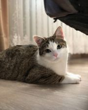 Suche Katzenbabys Kitten