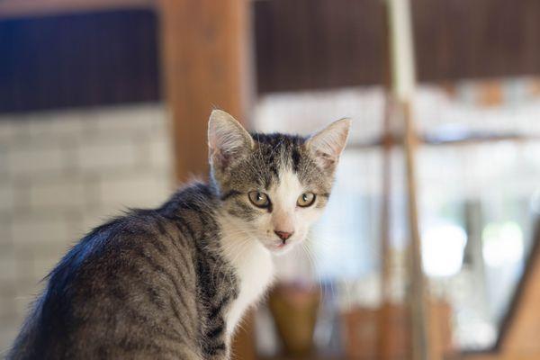 Kätzchen Kitten weiblich Hauskatze Katzen