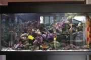 Meerwasseraquarium komplett oder