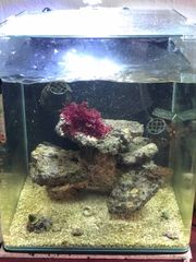 Lebendgestein für Meerwasseraquarium Gestein Meerwasser