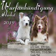 Wurfankündigung Herbst 2019