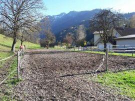 Pferdeboxen, Stellplätze - Offenstall Pferdeboxen zu vermieten