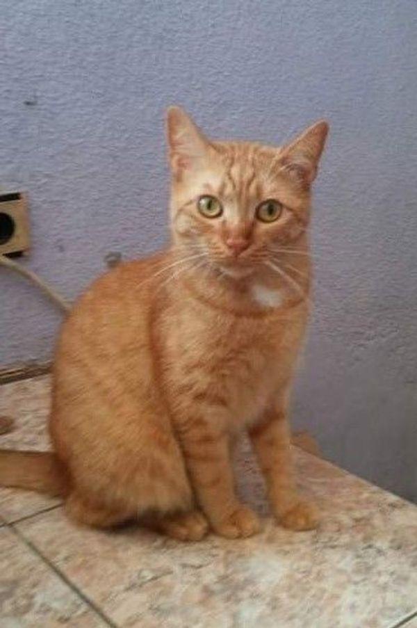 Kleines Katzchen Rufina Sucht Ihre Seelenverwandten In Horneburg Katzen Kaufen Und Verkaufen Uber Private Kleinanzeigen