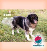 Bond - unübersehbar ein Herdenschutzhund