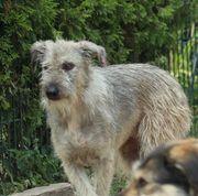 Misha 3 Jahre Mischlings-Hündin Hund