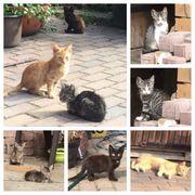 Diverse kleine Katzen und Kater
