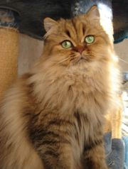 wunderschöne Katze in