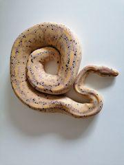 Black Pastel Pastel Banana het