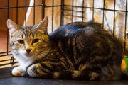 ein Katerchen für Katzenkenner
