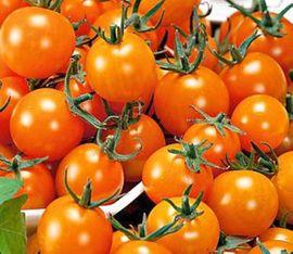 Set6 Tomate Cocktail orange - Inhalt: Kleinanzeigen aus Lauterach - Rubrik Pflanzen