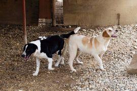 Melly- Ich brauche ganz besondere: Kleinanzeigen aus Kirchzell - Rubrik Hunde