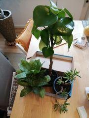 zimmerpflanzen 3