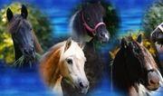Reit- und Pflegebeteiligungen Pferde Ponys