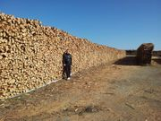 Holz trocken Brennholz 33cm lang