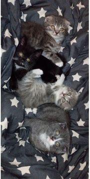 Kitten abholbereit