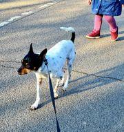 Kleiner Seniorenhund aus Köln sucht