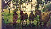 Reitbeteiligung am Pferd