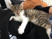 2 Babykatzen + Kratzbaum +