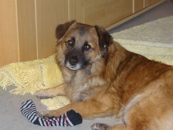 Toller Teddy Sucht Neuefamilie In Nürnberg Hunde Kaufen Und
