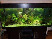 Juwel Aquarium 240 Liter