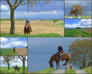 Urlaub im Elsass - für Reiter