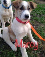 Hundemädchen Marcy sucht Traumzuhause