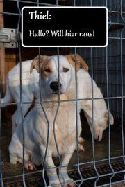 Thiel - Tierschutzhund sucht Zuhause für