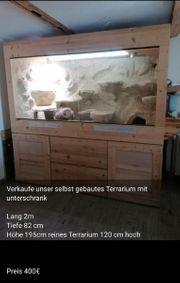 Terrarium und Bartargamen Pärchen abzugeben
