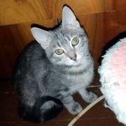 Süßes und verspieltes Kätzchen Hailey