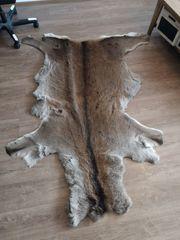 Elchfell naturbelassen 170x140 cm Zustand