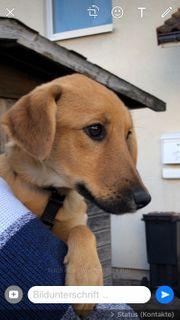 Cookie bildhübsches Hundekind