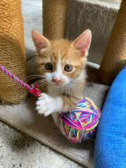 Noch 2 Kitten zu haben