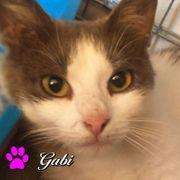 Gabi - liebenswerte Mieze sucht ein