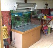 250 Liter Aquarium komplett ausgestattet