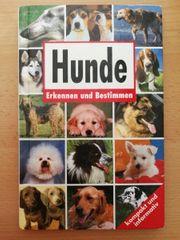 Hunde erkennen und bestimmen