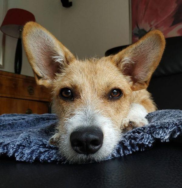 Hunde Kaufen Karlsruhe